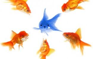 peces-personal-branding
