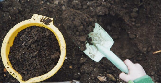 cultivar - nurturing